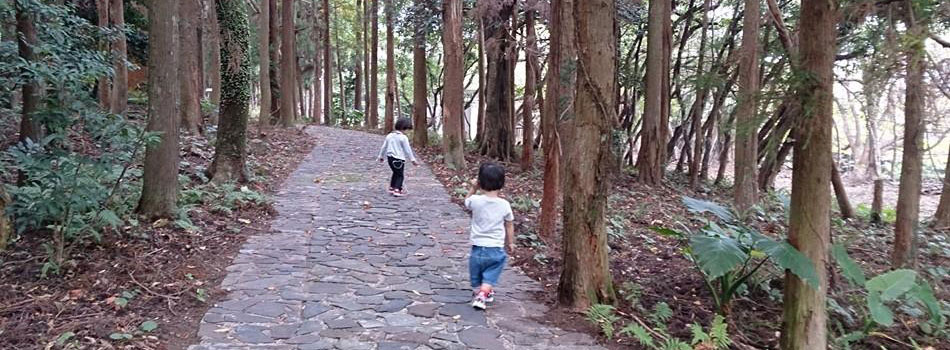 杉林を歩く